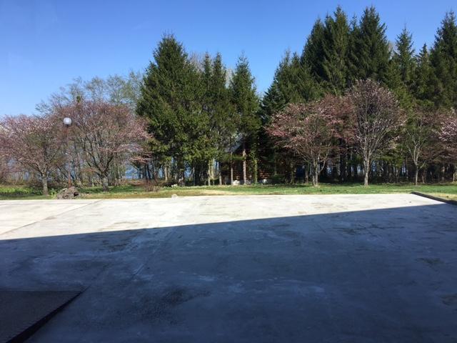 学校カフェ桜