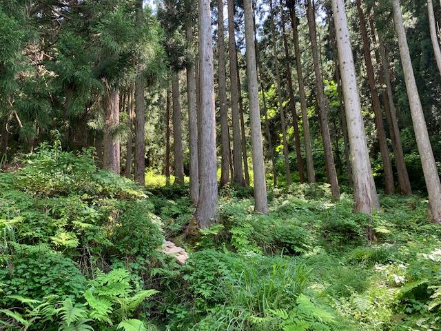 山林地図2