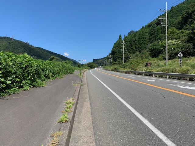 ビワイチ国道303号